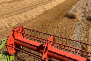 Redbank Farm is the Australian record holder for wheat with a yield of 13.1 ton per hectare. - Photo: Redbank Farm
