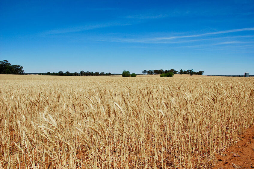 Australian soils, in particular in the marginal wheat belt in Western Australia, are structurally degraded. -  Photo: David Maunsell