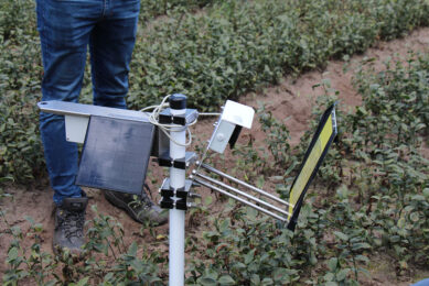 The iSCOUT Color Trap consists of a yellow adhesive trap with a 10-megapixel photo camera aimed at it. - Photo: NPPL