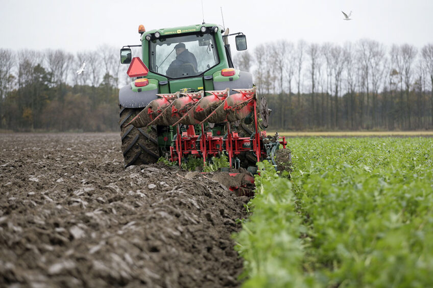 Tilling in cover crops. - Photo: Henk Riswick