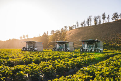 The TX robotic strawberry harvester. - Photo: Kubota