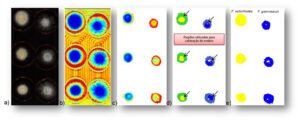 The new research method showed 100% accuracy. - Photo: Federal University of Minas Gerais